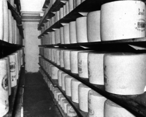 1962 Export 80 pound cheeses