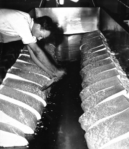 1963 Cheese room Laurie cutting cheese for milling